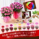 母の日カーネーション鉢植えギフト 母の日 プレゼント 選べる花色とお母さんも大満足の幸せ特典がいっぱい
