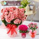 早割 園芸専門店が選ぶ母の日ギフト・アジサイ ベゴニアなどめずらしい季節の鉢花