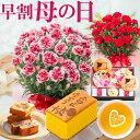 母の日 プレゼント カーネーション 花とスイーツ プレゼント ギフト お菓子付き ハートレモンティ 骨鶏カステラ 桐葉菓 ねこもにゃか から選べる