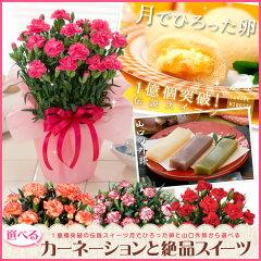 母の日 花とスイーツのプレゼント 送料無料 フラワーギフト2014 とお菓子のセット【SG】【1...