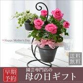 母の日ギフトバラの鉢植えギフト!デュエットローズ
