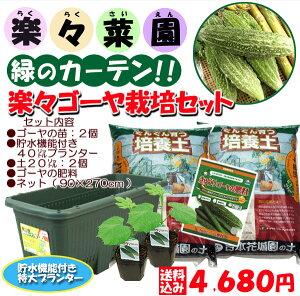 緑のカーテン、グリーンカーテンに挑戦だ♪楽々ゴーヤー栽培セット