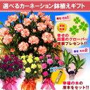 【送料無料】母の日のプレゼントはコレで決まり!【母の日ギフト】花色選べるカーネーション5号...