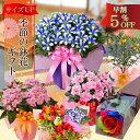 敬老の日ギフト 季節の鉢花 におい桜 リンドウ白寿 アザレア...