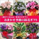 【送料無料】感謝の気持ちを伝えよう!今一番キレイな鉢花をお届けいたします!【遅れてゴメン...