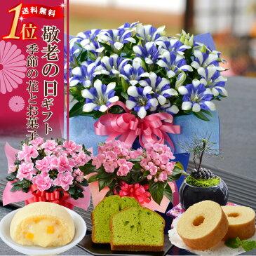 【敬老の日 ギフト】 選べる季節の鉢花(リンドウ、におい桜、松ぼっくり盆栽、アザレア)とスイーツセット(バウムクーヘン、抹茶ケーキ、月でひろった卵)