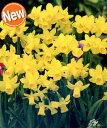 【花の大和】花のかわいい水仙 テタテート【3球】