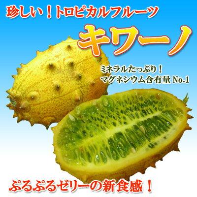 珍しい!トロピカルフルーツ【キワーノ】4号ポット苗