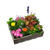 花苗 お花の玉手箱 1セット12ポット入り 2セット注文で 送料無料 ★園芸専門店が選ぶ 季節のお花の苗! 花壇 や 寄せ植え に