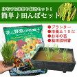 ご予約品 5月下旬より出荷 かんたん田んぼセット(半タル鉢1、稲苗1、土10L)! お米作り栽培セット