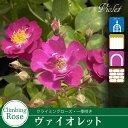 Rose09satou-72-2