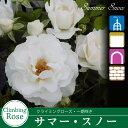 Rose09satou-73-2