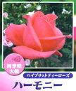 Rose-sato22