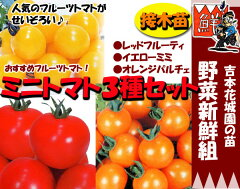 家庭菜園はじめませんか?甘くておいしいフルーツトマト、食べ比べてみよう4月にお届け予約品●...