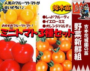 家庭菜園はじめませんか?甘くておいしいフルーツトマト、食べ比べてみよう88【PDSG】【4月中旬...