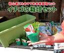 イチゴを育てる栽培セットです。イチゴ栽培セット【苗3、750型楽々菜園プランタ、いちごの肥料...