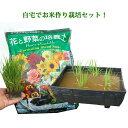 お米の栽培キット