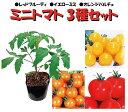 野菜苗 トマト苗3号ポットフルーツミニトマト食べ比べ3種セット 接木苗 レッドフルーティ1、イエローミミ1、オレンジパルチェ1 4月中旬以降お届け予約品