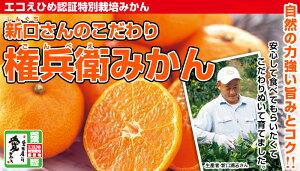 ★エコえひめ認証!特別栽培農産物愛媛県産権兵衛みかん約10kg