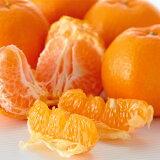 【送料無料】ワケありポンカンオレンジ約5kg