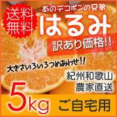 【送料無料】お試し!紀州和歌山 児玉農園のはるみ 家庭用約5kg【はるみ/みかん/訳あり/ワケあり/わけあり/家庭用】