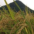 自然栽培 朝日米 玄米(10kg) (無農薬 無化学肥料 在来品種)