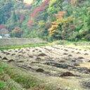 【送料無料】赤米 雑穀の女王あかこめの中のアカコメもち米の一種、赤飯になります。【RCP】赤米 広島県産赤米あかこめ/古代米アカコメ 1キロkg 24年産【送料無料】【10P06may13】