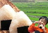 【新米】【米 お米】【26年産1等米】☆広島県産ミルキークイーン10キロkg(5キロkg×2黃袋)【】白米/玄米/分づき精米【楽ギフ包裝】【あす楽対応】【RCP】【HLSDU】【P27Mar15】