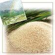 【ポイント10倍】【送料無料】広島県産自然農法で作った米20kg(5kg×4袋)☆青袋棚田米【28年産1等米】