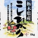 【ポイント10倍】【20年産】栃木県産コシヒカリ 5キロ (食協)【税込み】【10P20Feb09】