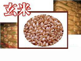 広島県産ヒノヒカリ10キロkg特A米(5キロ×2青袋)【送料無料】棚田の自然農法米ひのひかり<