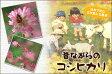 【ポイント10倍】【送料無料】島根県産コシヒカリ 10kg(5kg×2緑袋)【28年産1等米】