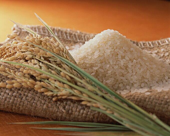 送料無料 広島県産ミルキークイーン5kg 特別栽培米 赤袋 令和元年産 新米1等米...