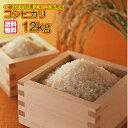 送料無料 広島県産コシヒカリ 10kg 特別栽培米福袋 10kg 5kg×2袋 2kg増量=合計12kgお届け 令和元年産 新米 1等米