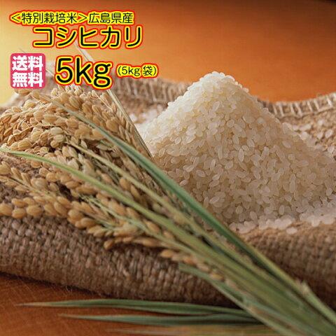 送料無料 広島県産コシヒカリ 5kg 特別栽培米 新米 黄色袋令和2年産1等米