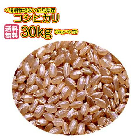 送料無料 広島県産コシヒカリ 30kg 玄米 特別栽培米 新米 30kg 5kg×6金袋 秘蔵米2年1等米