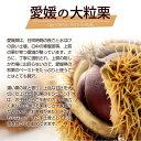 【和栗のモンブラン】5号サイズ 国産和栗 タルト 3
