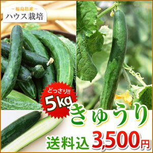 漬物、サラダ、酢の物に大活躍♪ハウス栽培の新鮮野菜をどっさりお届け。おすそわけにも福島県...