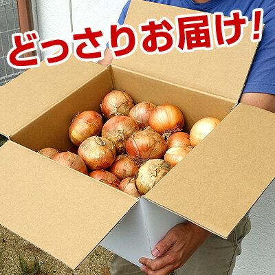 福島県産玉ねぎ10kg【送料無料】