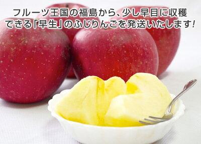 福島のりんご「早生ふじ」秀品・5kg・12〜16玉入