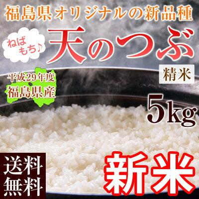 新米 29年 米 5kg 送料無料 【 福島県産 天のつぶ 】 白米 精米済 【5kg×1袋】