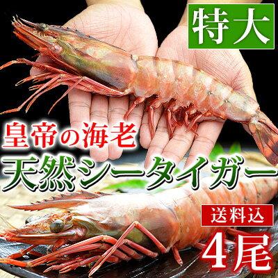 【送料込み】皇帝の海老ブランド・天然シータイガー(特大サイズ・4尾)