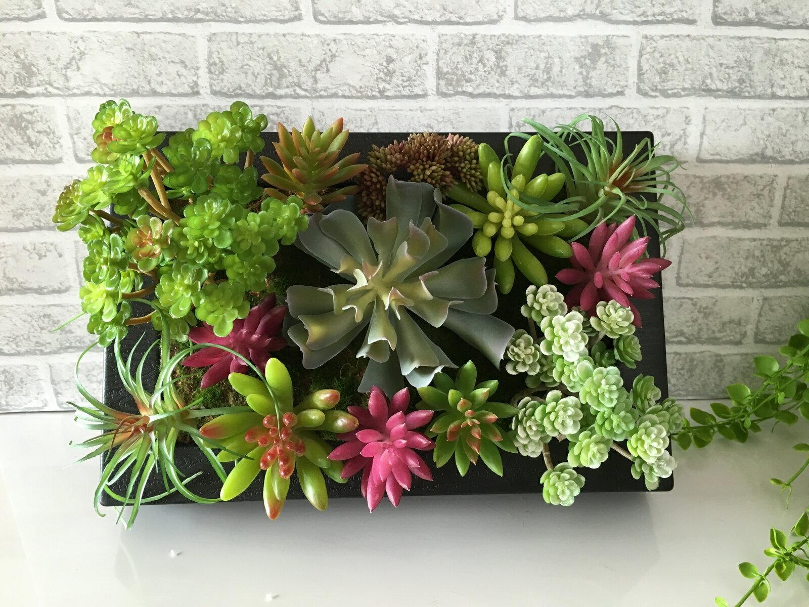 観葉植物 開店祝い / 新築祝い 開業祝い timber アートパネル 多肉植物