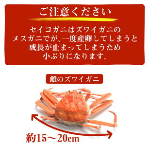 セイコガニ100%石川県産松葉セイコガニ6〜8杯入り