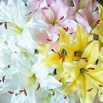 カサブランカ造花