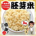 千葉県産 こしひかり 胚芽米 5kg ※ヤマト運輸指定の場合は追加送料が掛かる地域があります。お米 熨斗紙 名入れ お祝い ギフト対応