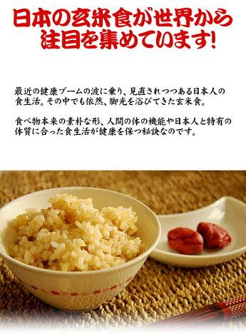 30年産千葉県産ミルキークイーン玄米5kg玄米食でも安心!選別調整済み※送料無料の地域あります!お米熨斗紙名入れお祝いギフト対応