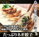 ぽんちゃん特製たっぷりネギ餃子25個入