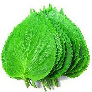 Refrigerate ◆ ◆ 20 leaves of perilla market ■ Korea food ■ Korea cuisine and Korea food material / Korea vegetable / Jiang Sesame leaves and perilla leaf and ケッニプ