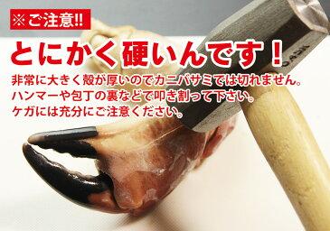 エントリーでポイント10倍 年末 年始 配送受付中 / ブラウンクラブ爪下付爪 超特大 総重量1kg / かに カニ 蟹 ボイル ヨーロッパ ボイル お歳暮 御歳暮